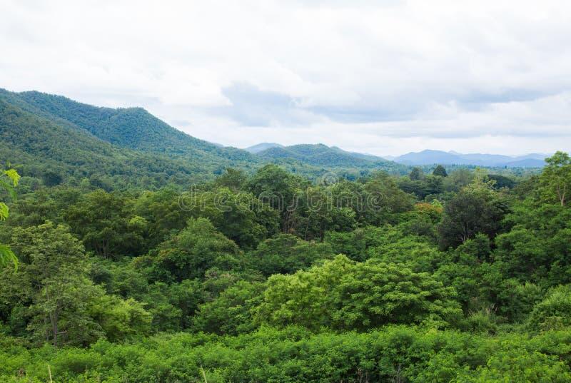 Горы благоустраивают в Chiangmai Таиланде стоковые фотографии rf