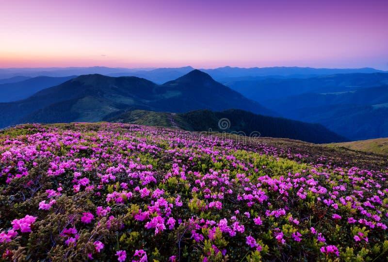 Горы во время цветения и восхода солнца цветков стоковая фотография rf