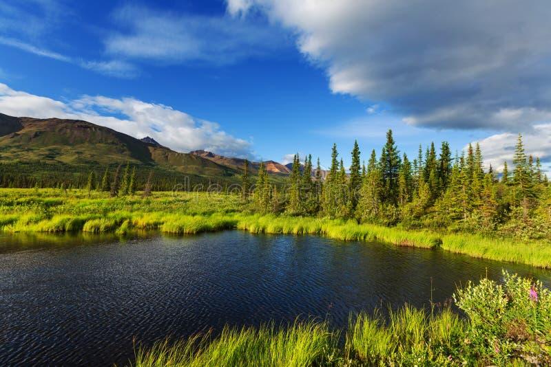 Горы в Аляске стоковая фотография rf