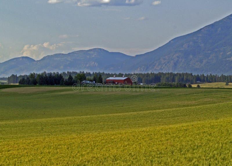 горы зерна поля фермы амбара стоковое фото rf