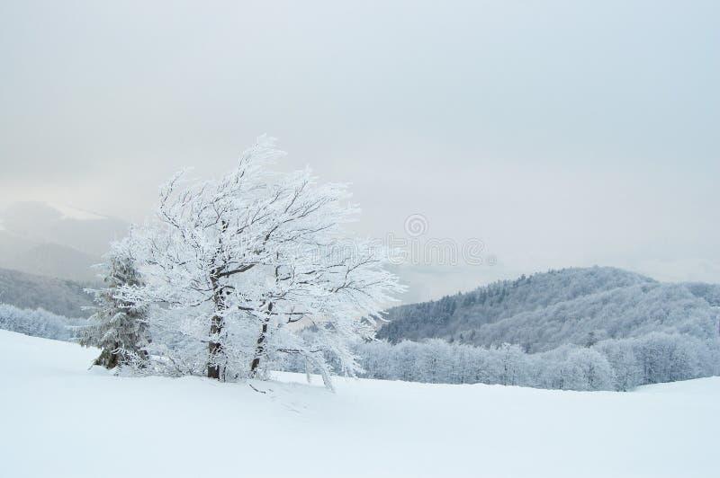 Горы зимы стоковая фотография