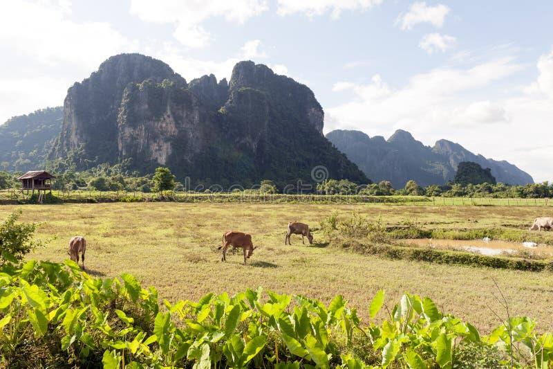 Горы известняка в Vang Vieng, популярном городке курорта в Лаосе стоковые изображения