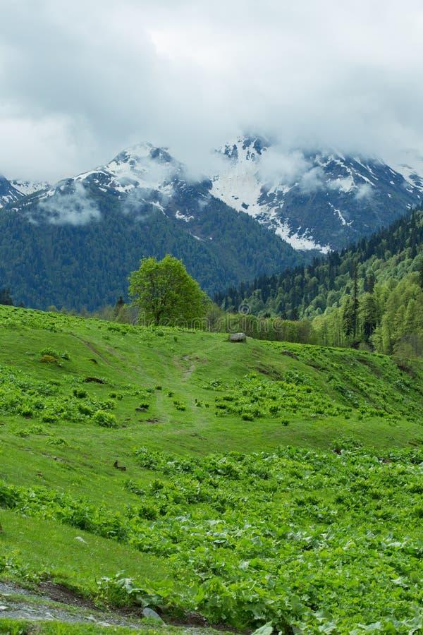Горы и леса абхазии стоковые изображения rf