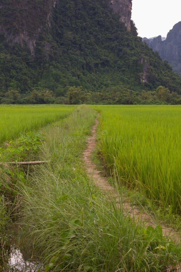 Горы и рис. стоковые фотографии rf