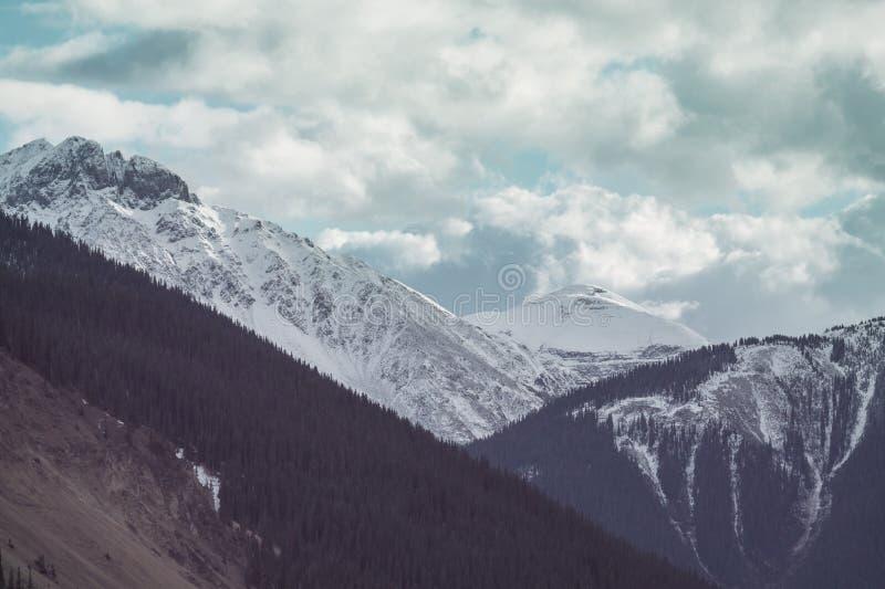 Горы Колорадо стоковое фото