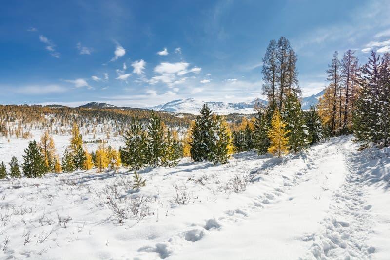 Горы осени с красочными деревьями покрытыми со снегом на солнечный день стоковые фото