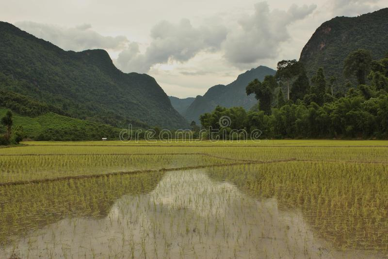 Горы отражая в рисовых полях в Muang Ngoi, Лаосе стоковые фото