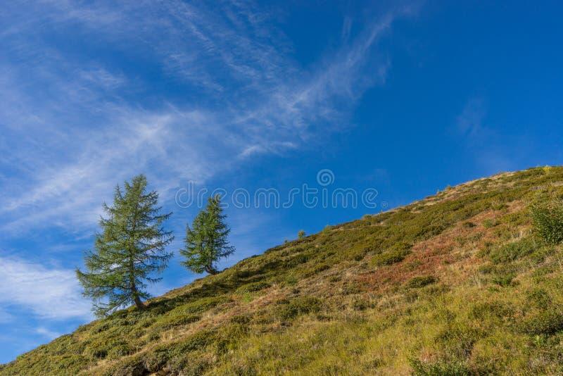 Горы, пики и ландшафт деревьев, окружающая среда Дорога Timmelsjoch высокая высокогорная стоковая фотография