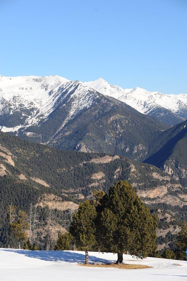 Горы покрытые с снегом и перерастанные с спрусом - княжеством Андорры, Пиренеи, Европы стоковая фотография rf