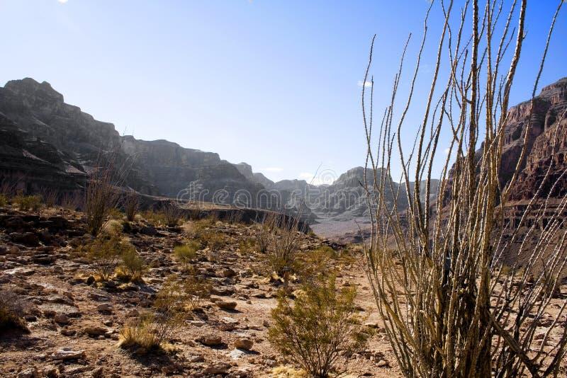 горы пустыни стоковые изображения