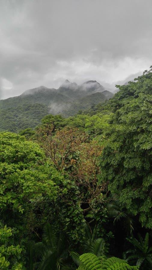 Горы Пуэрто-Рико дождевого леса El Yunque стоковые фотографии rf