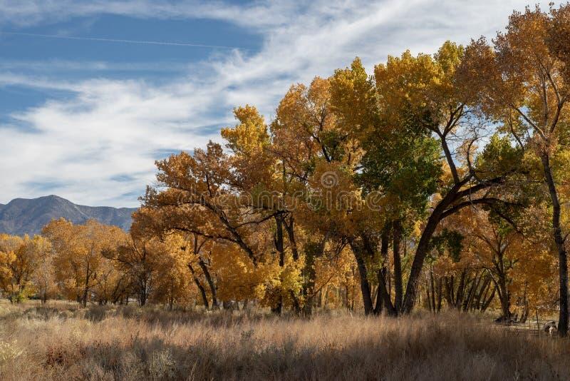 Горы сьерра-невады желтого листопада дерева осени восточные стоковое изображение