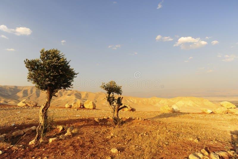 горы judea стоковая фотография rf