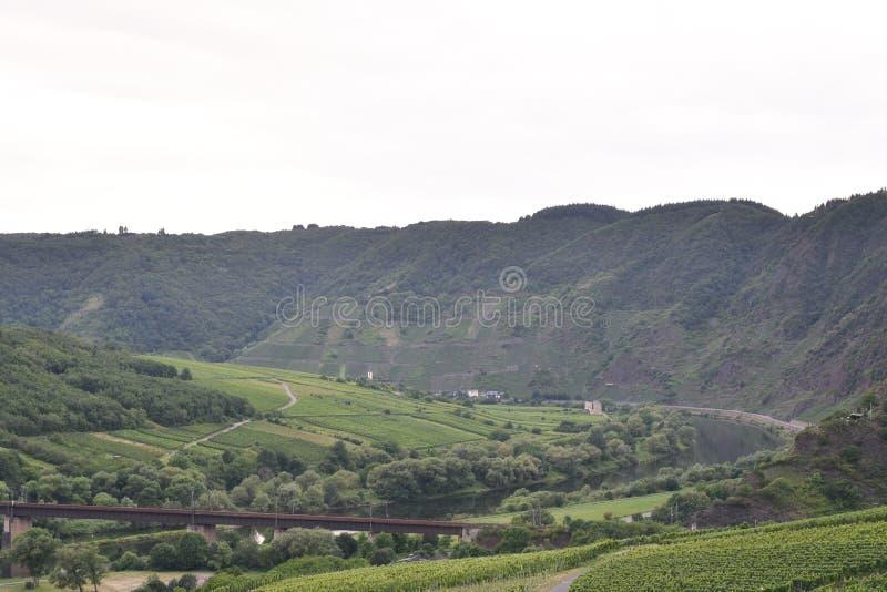 Горы Moezel Германия с виноградиной стоковые изображения rf