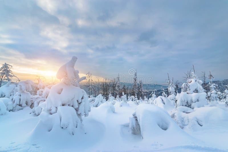 горы n силезские Beskid покрытых Снег молодых деревьев в зимнем времени стоковое фото