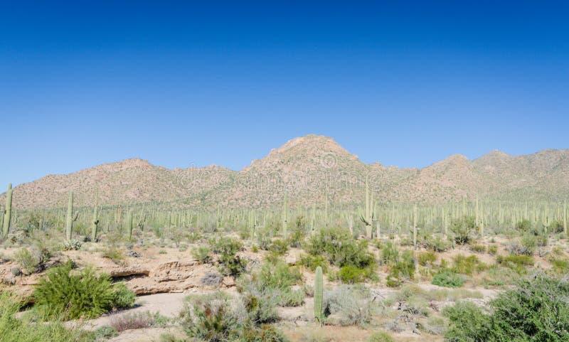 Горы Rincon - красный центр для посетителей холмов - Saguaro национальный p стоковые фото