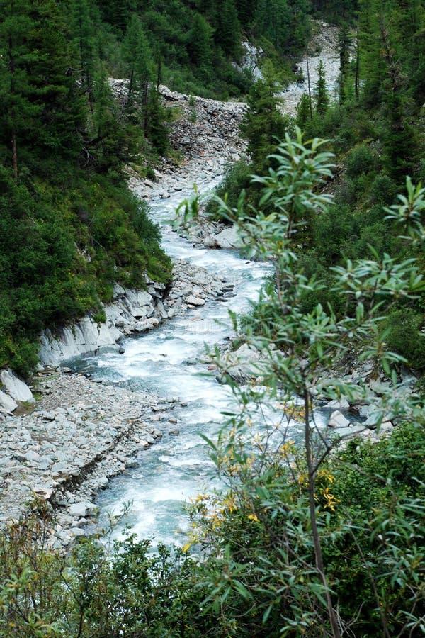 Горы, shumack, Lake Baikal, река, вода, отключение, спрус, лес, гора, Россия стоковые изображения rf