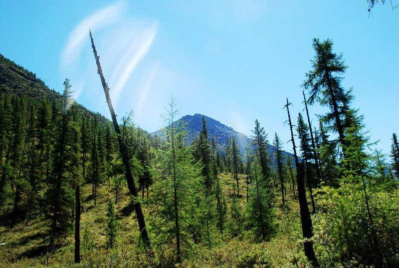 Горы, shumack, Lake Baikal, река, вода, отключение, спрус, лес, гора, Россия стоковые фото