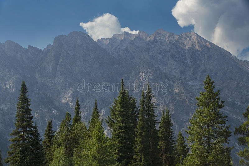 Горы Teton, голубое небо и зеленые сосны, Jackson Hole, Вайоминг стоковое фото rf