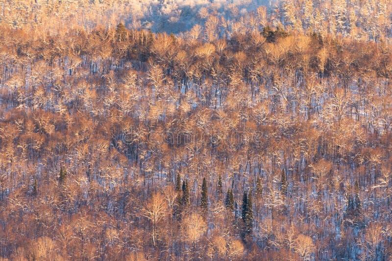 Горы Ural в выравниваясь свете стоковое изображение