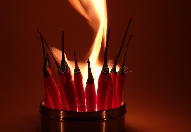 горячая специя Стоковое Фото