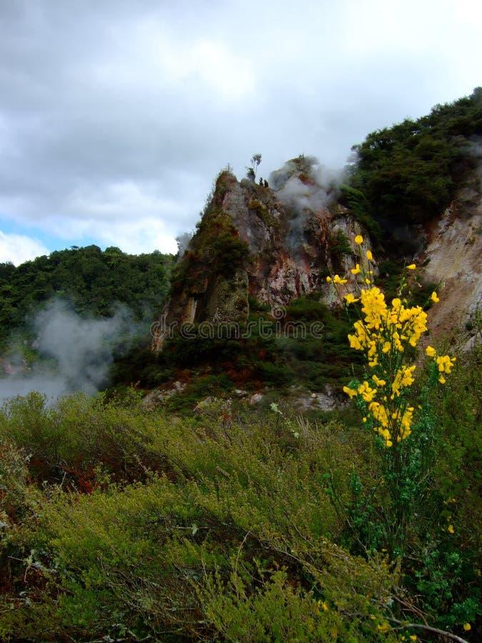 горячее rotorua скачет долина стоковое фото