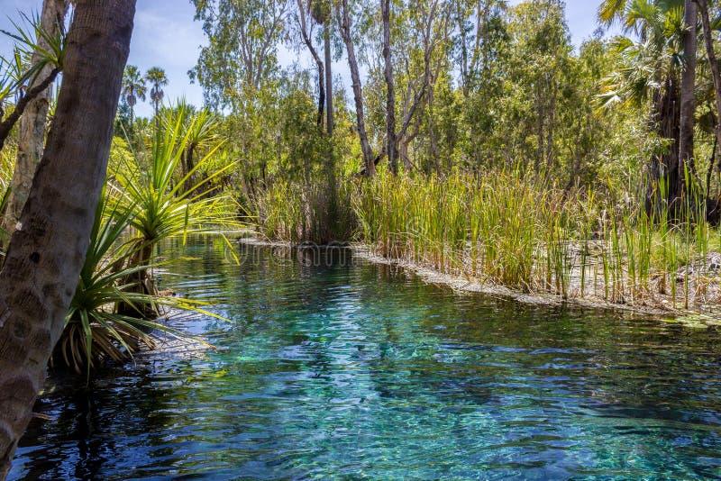 горячие источники mataranka в реке Waterhouse, mataranka, северных территориях, Австралии стоковое фото