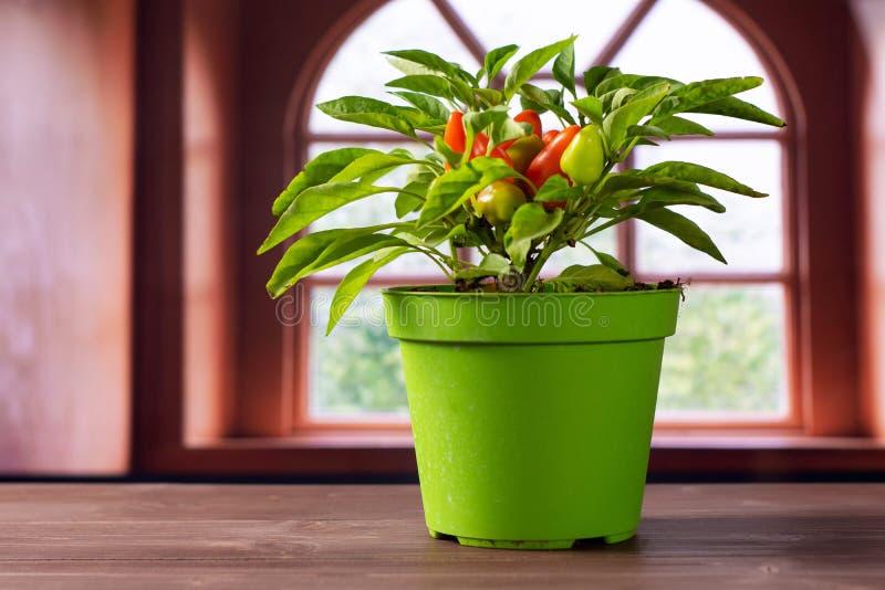 Горячий красный оранжевый перец chili с окном позади стоковое фото rf