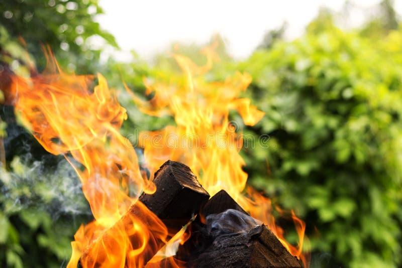 Горящие firewoods против предпосылки природы Закройте вверх по съемке стоковое фото rf