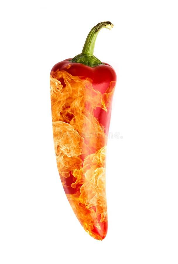 горящий красный цвет перца chili стоковые изображения rf