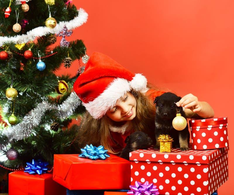 Госпожа Санта дает малый подарок к собакам около рождественской елки стоковое фото