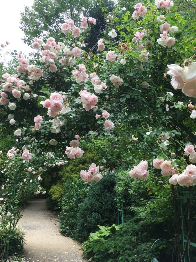 Готовая, установленная свадьба Розовая настоянная дорожка стоковые фотографии rf