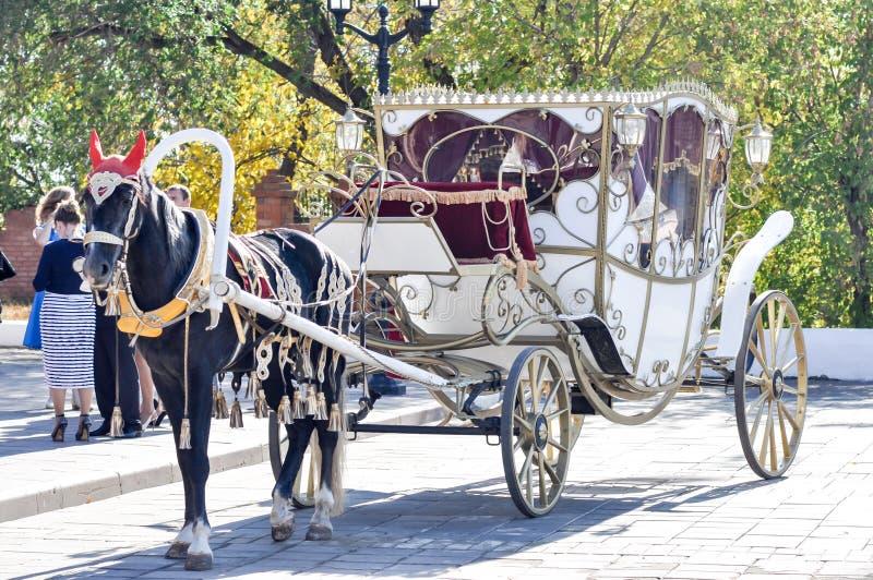 2014 года лошади, лошадь свадьбы стоковые фото