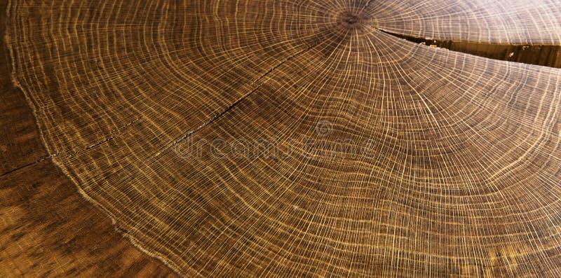 Год круглой древесины звенит текстура стоковое фото rf