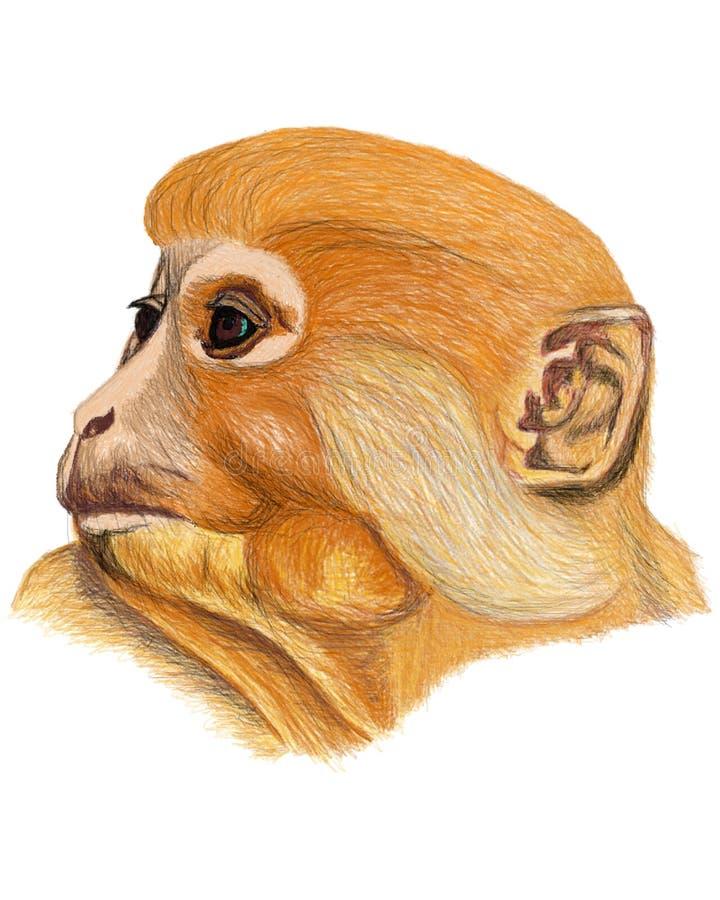 Год обезьяны стоковая фотография rf