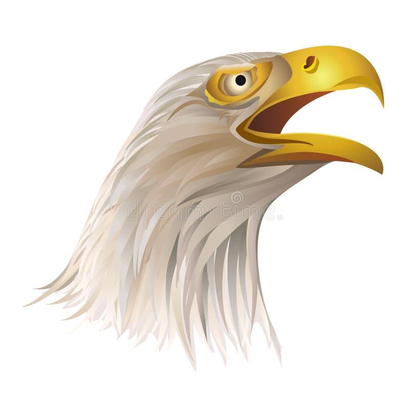 Голова белоголового орлана на белой предпосылке иллюстрация штока