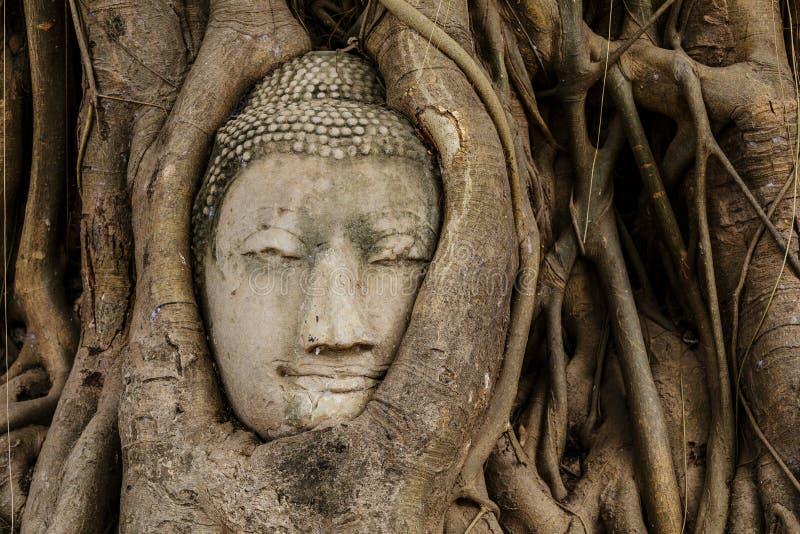 Download Голова Будды в баньяне стоковое изображение. изображение насчитывающей таиланд - 33737647