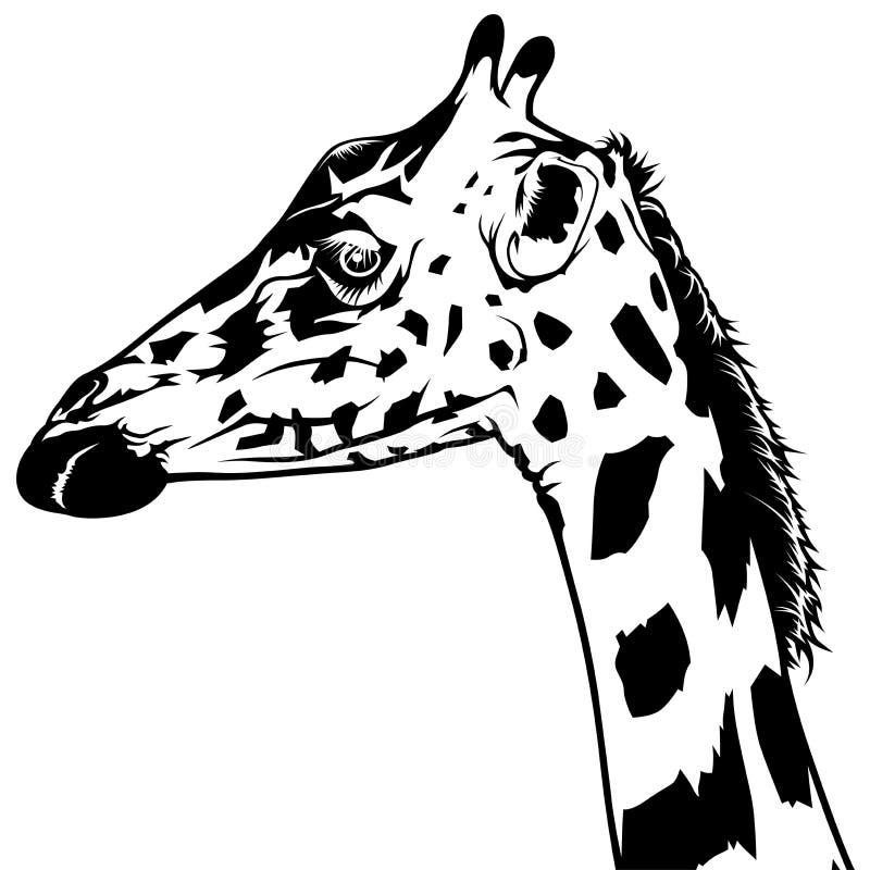 Картинка головы жирафа черно-белая