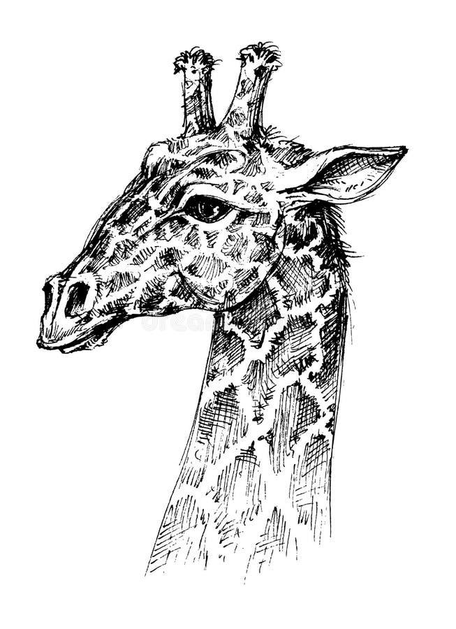 Голова жирафа иллюстрация штока