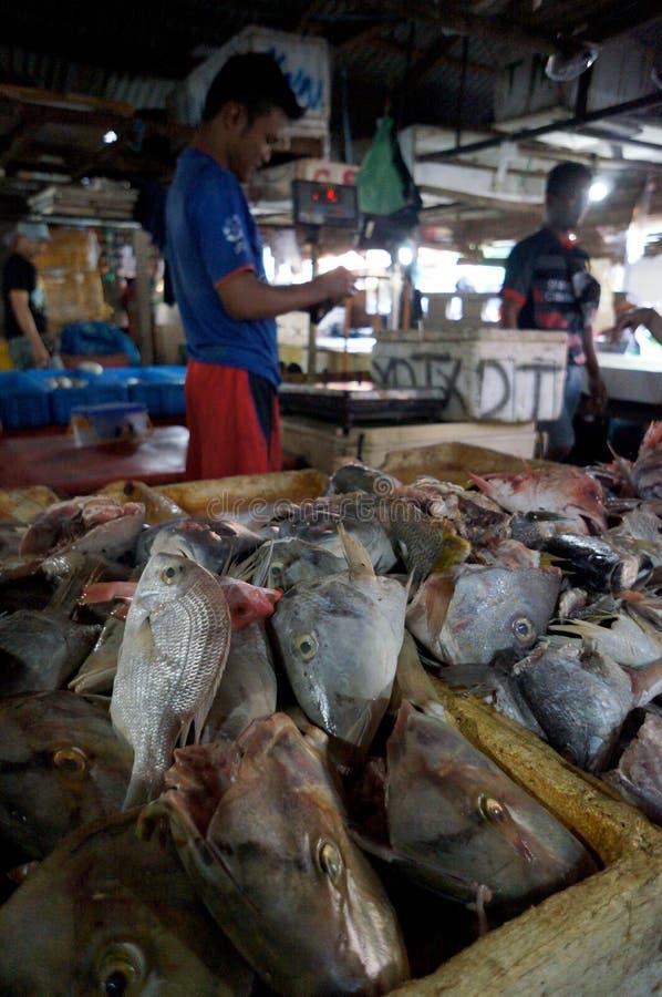 Голова рыб стоковое фото