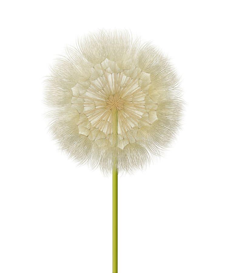 Голова семени одуванчика бесплатная иллюстрация