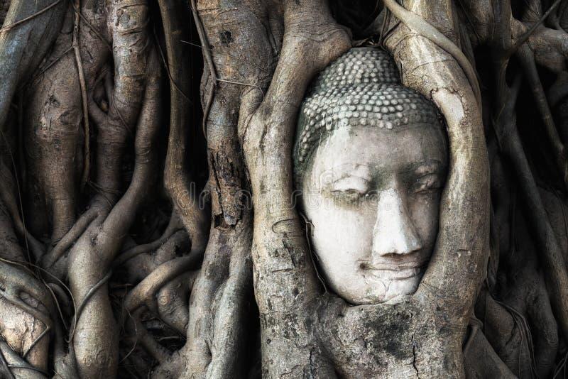 Голова статуи Будды в дереве укореняет на виске i Wat Mahathat стоковое фото rf