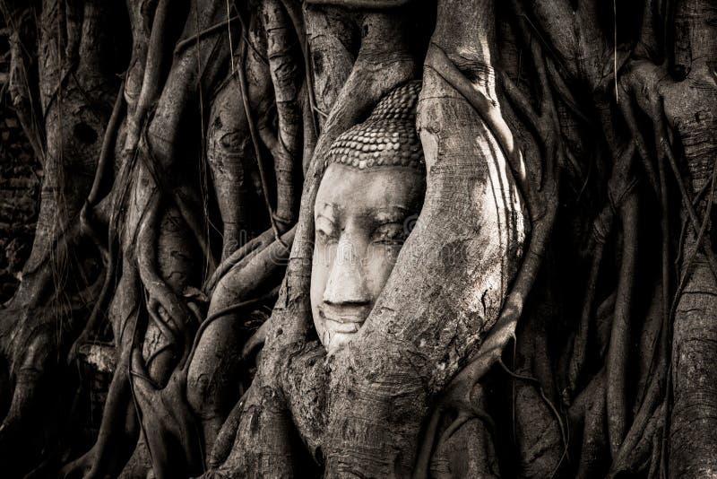 Голова статуи Будды песчаника устроилась удобно в корнях дерева около небольших часовен Wat Maha которые, Phra Nakhon Si Ayutthay стоковое фото rf