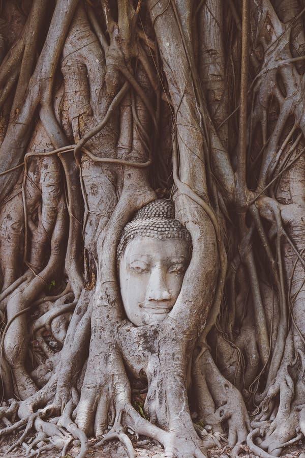головка Будды стоковое изображение