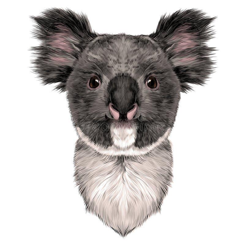 Головная коала бесплатная иллюстрация