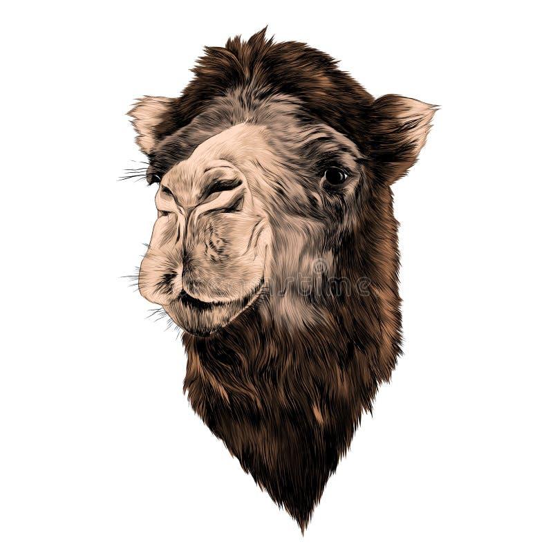 Головной верблюд иллюстрация вектора