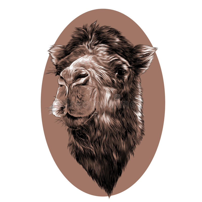 Головной верблюд иллюстрация штока
