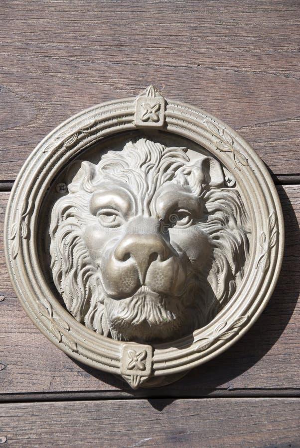 головной львев стоковые фотографии rf