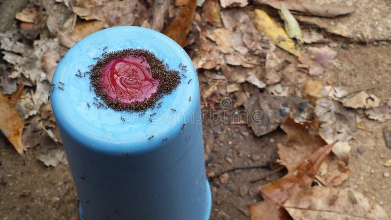 Голодные муравьи стоковое фото rf