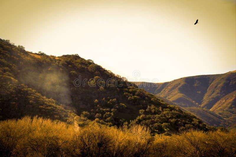Год сбора винограда Калифорнии стоковые изображения rf